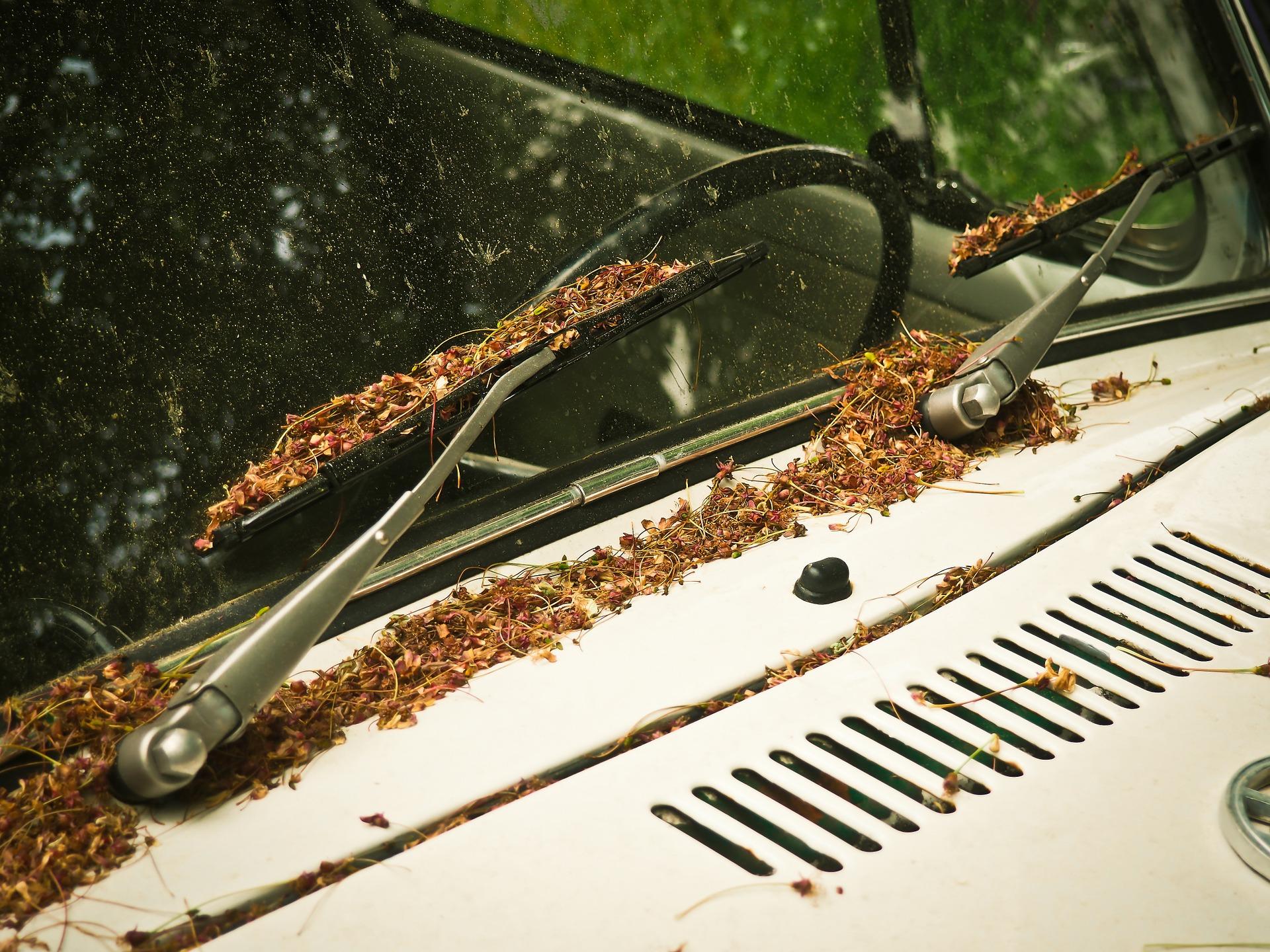 Limpieza del parabrisas del coche - Autolavado Entenza